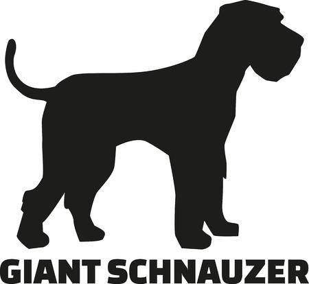 schnauzer: Giant Schnauzer with breed name