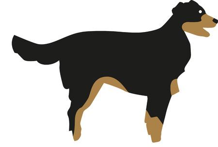 bernese: Bernese mountain dog