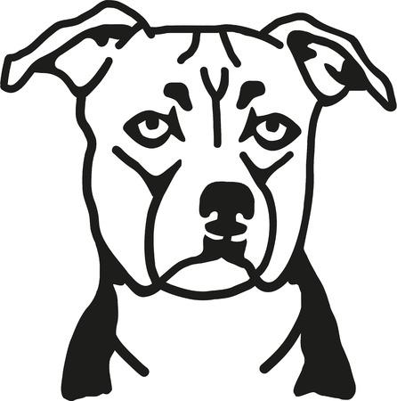 stafford: Staffordshire Bull Terrier head
