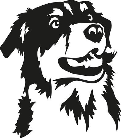 オーストラリアの羊飼いの頭  イラスト・ベクター素材