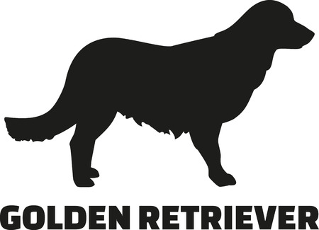 Golden retriever with breed name