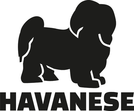 breed: Havanese with breed name Illustration
