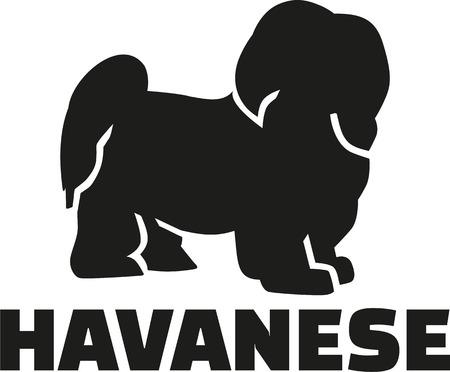 havanese: Havanese with breed name Illustration
