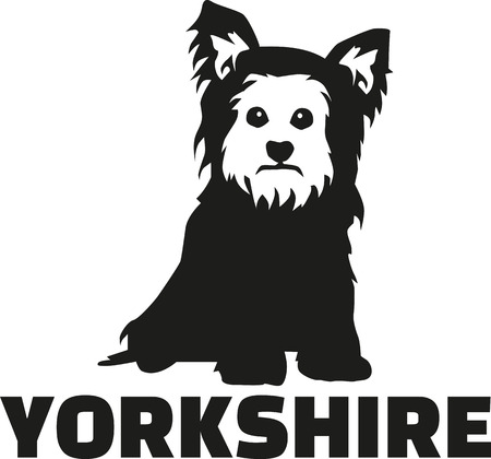 yorkshire terrier: Yorkshire Terrier with breed name Illustration
