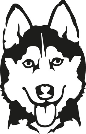 siberian husky: Husky head