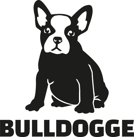 French bulldog with breed name