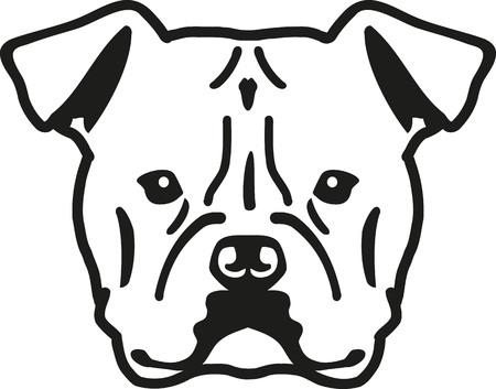 cabeza Bulldog americano