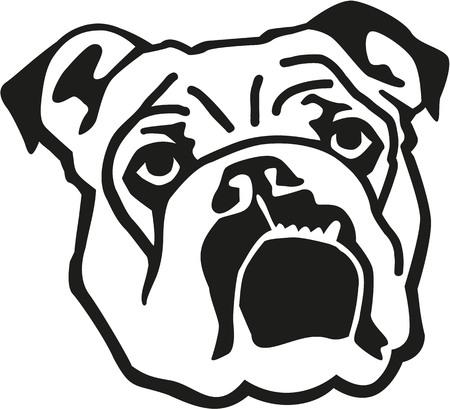 la cabeza de bulldog Inglés