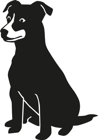 jack russell terrier: Sitting Jack Russell Terrier