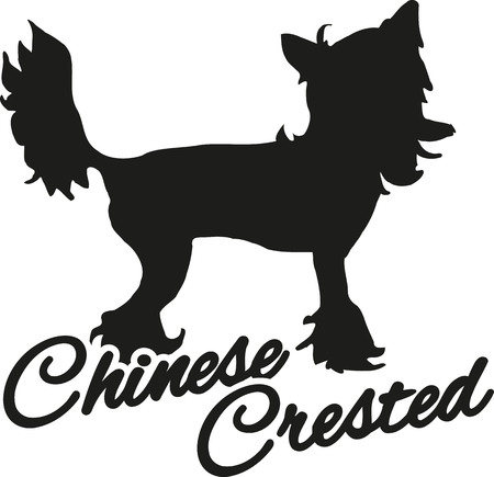 breed: Chinese crested with breed name