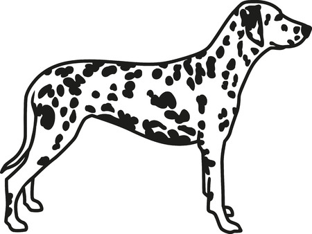 spotted: Dalmatian with spotted coat Illustration