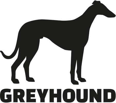 breed: Greyhound with breed name Illustration