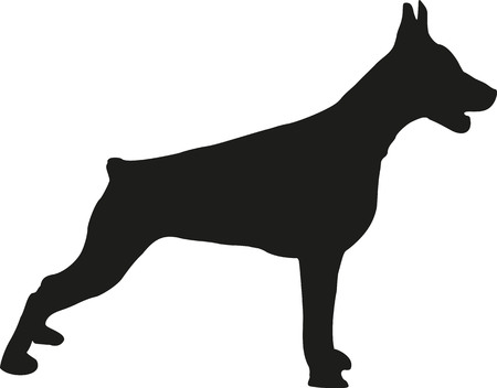 doberman: Doberman standing Illustration