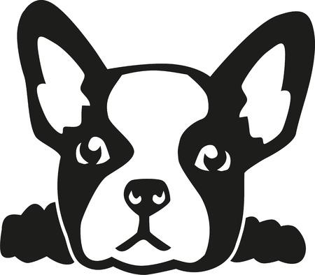 Franse bulldog hoofd Vector Illustratie