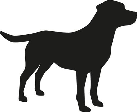 ラブラドル ・ レトリーバー犬のシルエット