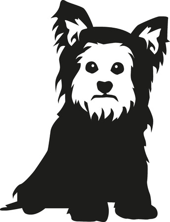 yorkshire terrier: Yorkshire Terrier sitting Illustration