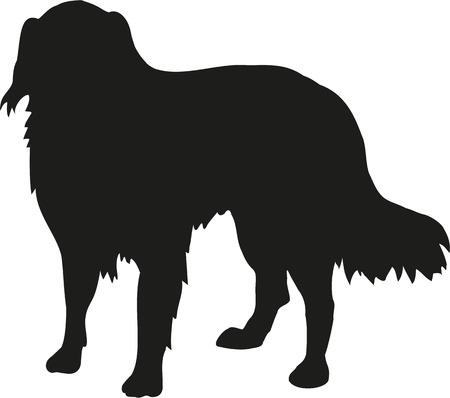 australian shepherd: Australian Shepherd silhouette Illustration