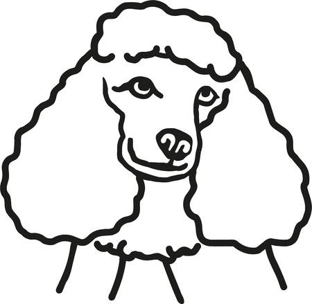 la cabeza del caniche