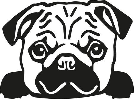 pug puppy: Pug head