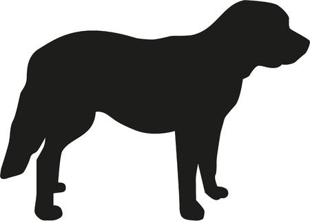 st bernard dog: St. Bernard dog standing