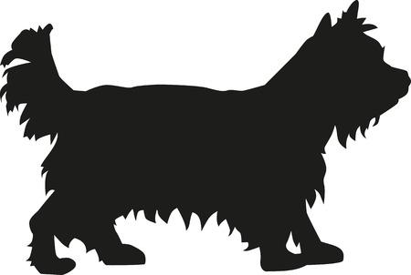 Yorkshire-Terrier-Hund