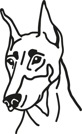 doberman: Doberman head Illustration