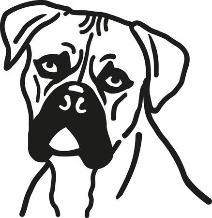 perro boxer: la cabeza del perro del boxeador