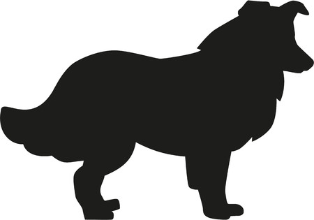 Collie silhouette Illustration