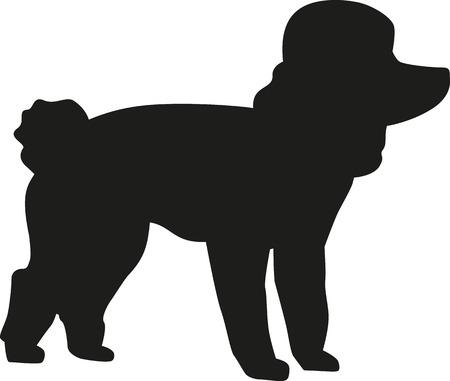 miniature breed: silueta del perro de caniche