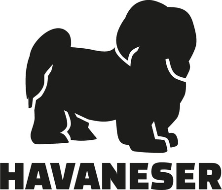 havanese: Havanese with german breed name