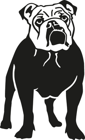 british bulldog: English bulldog