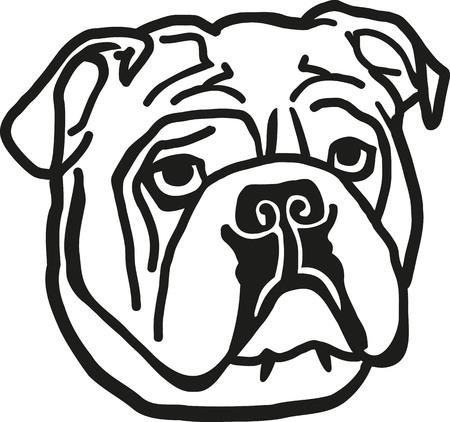 british bulldog: Bulldog head Illustration