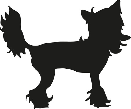 curtis: Chinese crested silhouette Illustration