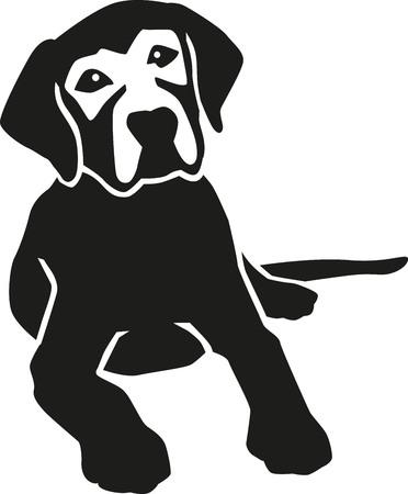 横になっているラブラドル ・ レトリーバー犬