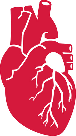 heart organ: Real human heart organ Illustration