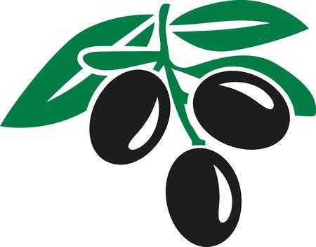 Aceitunas negras con las hojas Ilustración de vector