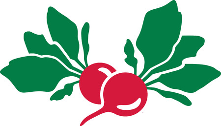 vegatables: Red radish