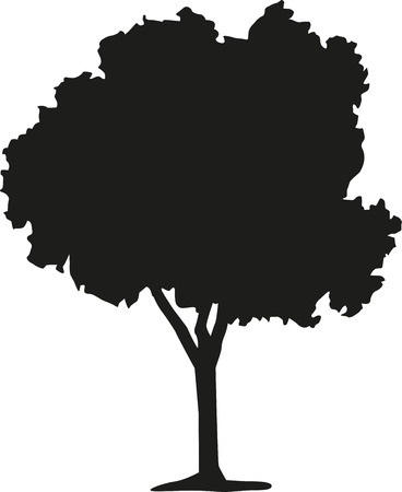deciduous tree: Silhouette of deciduous tree