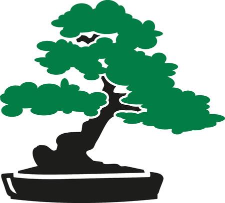 japanese garden: Bonsai Tree icon Illustration