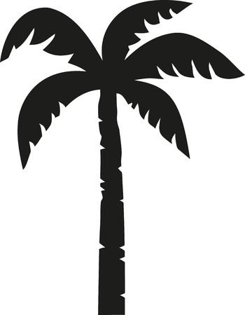 palm tree vector: Palm tree vector