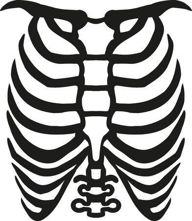 ribcage: Human ribcage