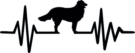 Heartbeat pulse line dog with bernese mountain silhouette black