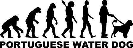 Portuguese water dog evolution with word illustration. Illustration