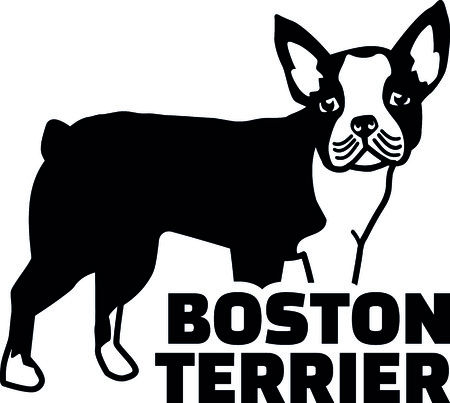 Boston terrier silhouette real with word illustration.