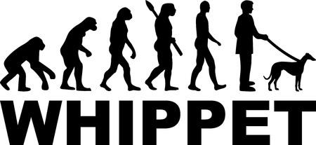 Whippet evolution with dog name illustration.