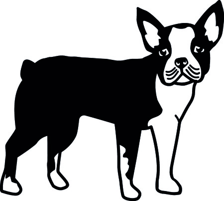 Boston terrier silhouette real in black and white illustration.