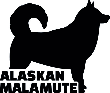 Alaskan malamute silhouette real with word illustration.