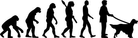 English Setter evolution development with silhouette