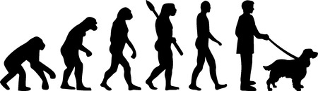 English Springer Spaniel evolution development with silhouette Illusztráció