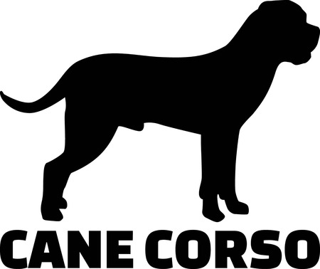 Cane Corso silhouette real with word Illustration